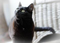 Cat Hebe