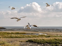 """Ameland • <a style=""""font-size:0.8em;"""" href=""""http://www.flickr.com/photos/139847504@N02/30004722851/"""" target=""""_blank"""">View on Flickr</a>"""