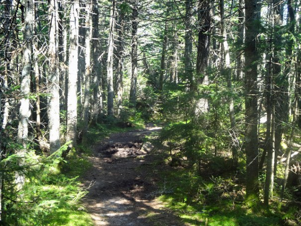 Kinsman Ridge Trail on NH Appalachian Trail