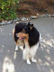 "Tyler, the Wonder Dog! • <a style=""font-size:0.8em;"" href=""http://www.flickr.com/photos/79686536@N02/7310270874/"" target=""_blank"">View on Flickr</a>"