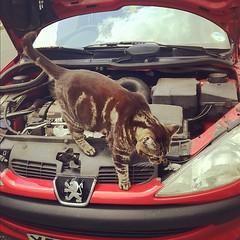 Kitty Mechanic