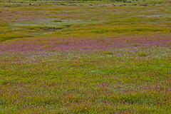 Kaas - Heaven on Earth - Plateau of Flowers