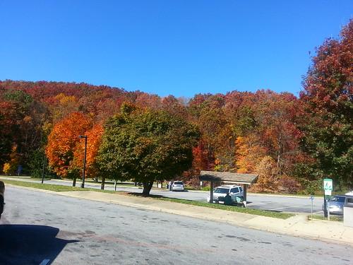 Asheville falll 2012