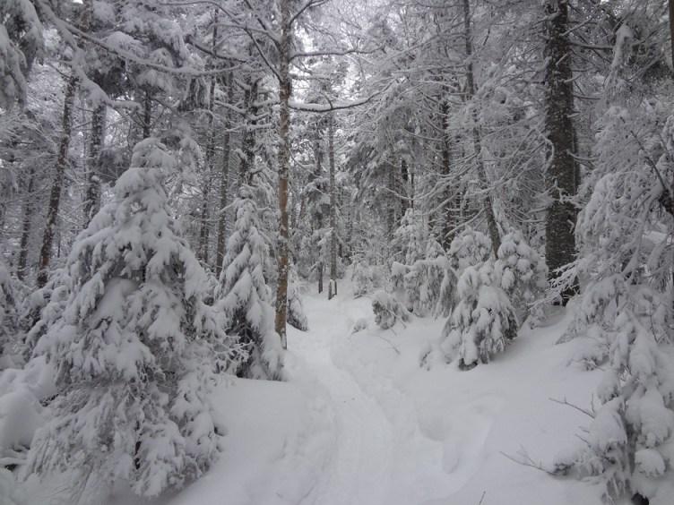 Snowy Crawford Path on Mt. Pierce