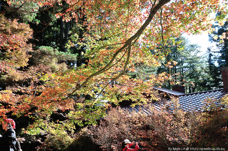 福壽山農場楓紅-32