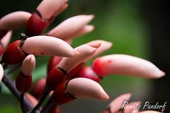 Growing nails