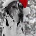 Merry Christmas! - En färgstark tomteluva