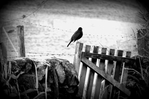 Blackbird on the Wall (Eyes of the Heart, Week 2)