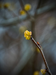 Spring-ing