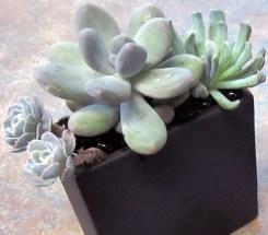Succulents Arrangement