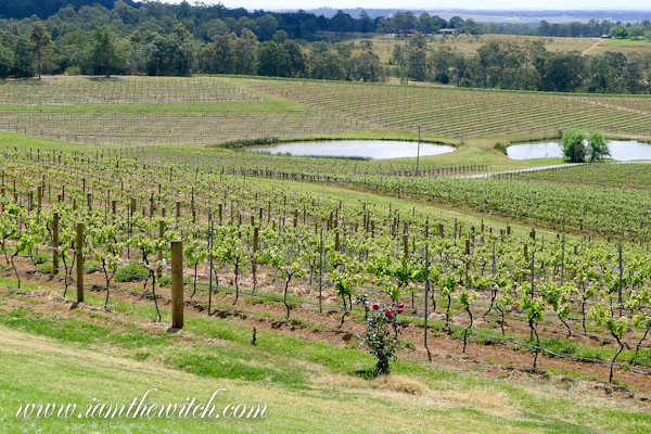 Audrey Wilkinson vineyard