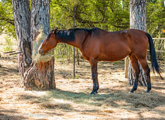"""Just a horse • <a style=""""font-size:0.8em;"""" href=""""http://www.flickr.com/photos/67597598@N08/29041246775/"""" target=""""_blank"""">View on Flickr</a>"""
