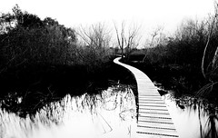 A Weaving Path Through the Wetlands