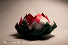 Italian paper lotus