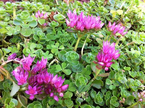 東京ミッドタウンの花(Unknown flower at Tokyo Midtown)
