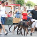 """2012-07-29-feria-almoradi-desfile-animales-tradicionales • <a style=""""font-size:0.8em;"""" href=""""http://www.flickr.com/photos/51501120@N05/7669720212/"""" target=""""_blank"""">View on Flickr</a>"""