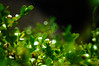 Photo:greenscale By