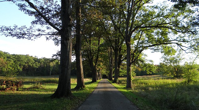 Oak-lined road - Skylands Manor, NJ