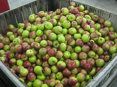 """""""Tart"""" Apples"""