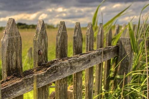 uk summer fence holidays norfolk slug rem regnounito... (Photo: AndreaPucci on Flickr)