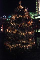 The Providence Biltmore Christmas Tree.