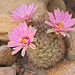 """Cactus • <a style=""""font-size:0.8em;"""" href=""""http://www.flickr.com/photos/7983687@N06/8319842174/"""" target=""""_blank"""">View on Flickr</a>"""
