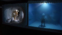 """Wampa Cave diorama • <a style=""""font-size:0.8em;"""" href=""""http://www.flickr.com/photos/86825788@N06/8362664422/"""" target=""""_blank"""">View on Flickr</a>"""