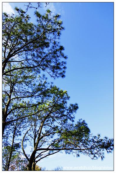 [桃園.旅遊]慈湖兩蔣文化園區&石門水庫賞楓撲空之旅 @VIVIYU小世界