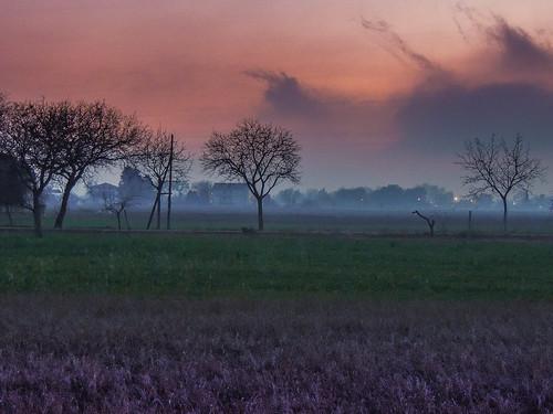 Tramonto... (rospex) alberi tramonto colori sera sibillini