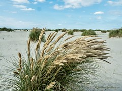 """Weekend Ameland 2016 • <a style=""""font-size:0.8em;"""" href=""""http://www.flickr.com/photos/138177527@N03/30022338412/"""" target=""""_blank"""">View on Flickr</a>"""