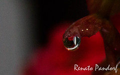 Drop on red
