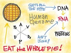 John Rinn - Genomic Garbage Man