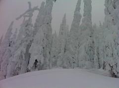 Big Mountain trees