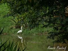 Narcissus bird
