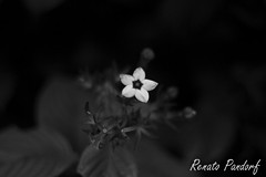 Whitestar - B&W