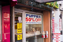 PUPPIES 50% OFF