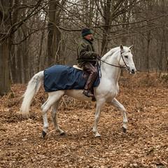 Débardage dans le Bois de la Houssière - Février 2013