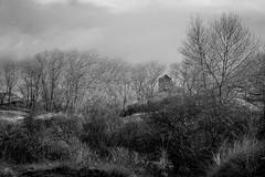 Coxyde - Février 2013