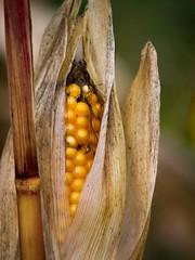 October harvest month
