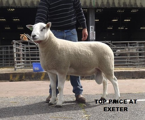 Exeter sale