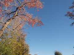 Trees, Plane, and Moon