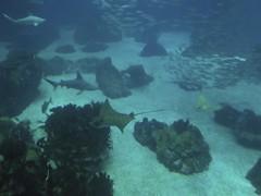 plein d'espèces Aquarium Lisbonne
