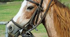 """Das Zaumzeug. Die Zaumzeuge. Das Pferd trägt ein Zaumzeug. • <a style=""""font-size:0.8em;"""" href=""""http://www.flickr.com/photos/42554185@N00/29695027923/"""" target=""""_blank"""">View on Flickr</a>"""