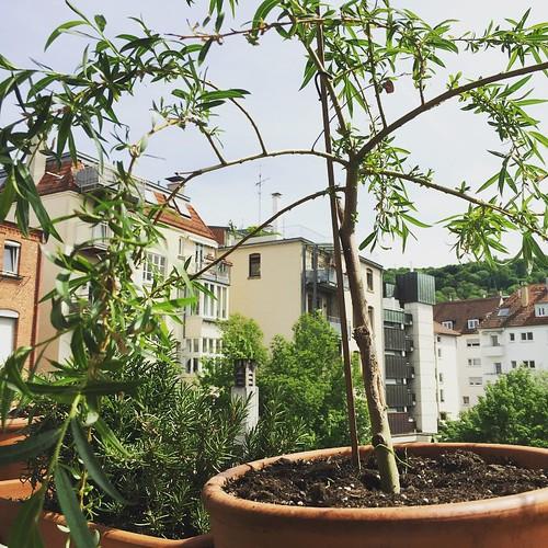 Grünes Traumland #Balkonien  #Balkon #0711 #Stuttgart
