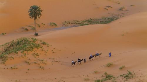 Einsame Palme in der Wüste