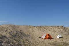 Tucked in the dunes
