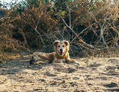 We slept beside thorn bushes last night. Sav dug a hole while I got a puncture in my sleeping pad. #theworldwalk #travel #peru #savannahtww