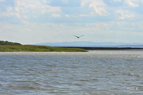 Seagull Landscape Lake Summer / Sirály Táj Tó Nyár