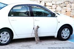 Abranme la puerta (Ħaġar Qim)
