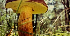 """Der Pilz. Die Pilze. Ein Pilz steht im Wald. • <a style=""""font-size:0.8em;"""" href=""""http://www.flickr.com/photos/42554185@N00/27907360033/"""" target=""""_blank"""">View on Flickr</a>"""